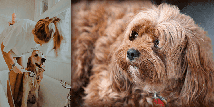 Groom Dogs With Long Hair