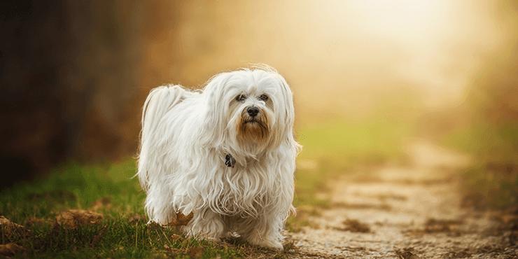 Make Dog Hair Soft