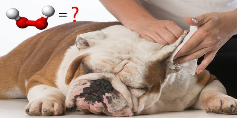 How to Clean Dog Ears with Hydrogen Peroxide