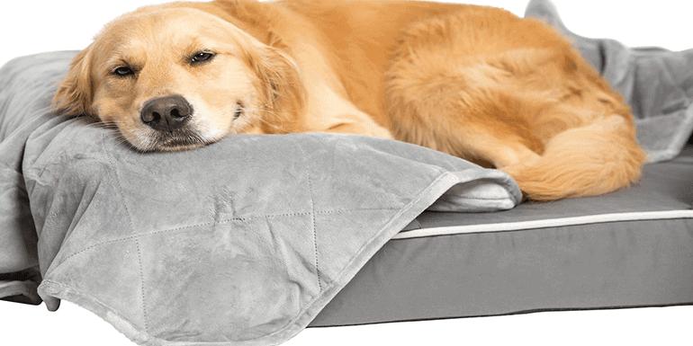 Best Blanket for Dog Hair