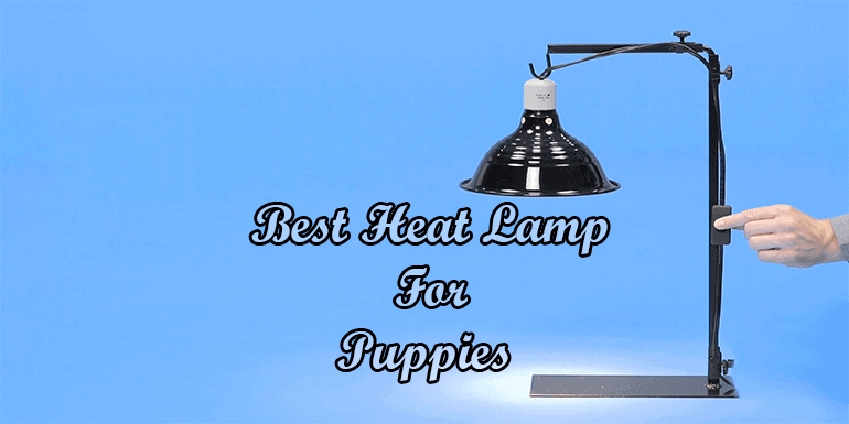 Best Heat Lamp For Puppies