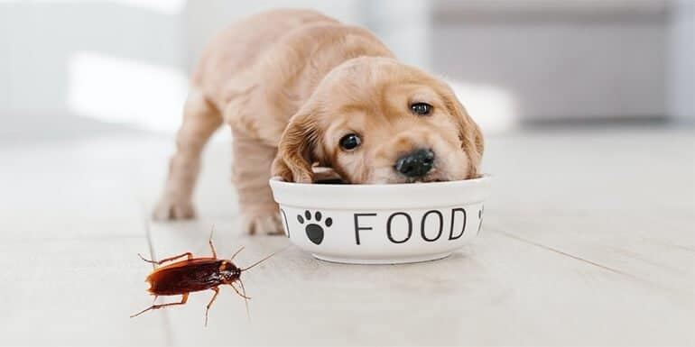How to Keep Roaches Out Of Dog Food