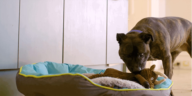 How Long Should A Dog With Parvo Be Isolated